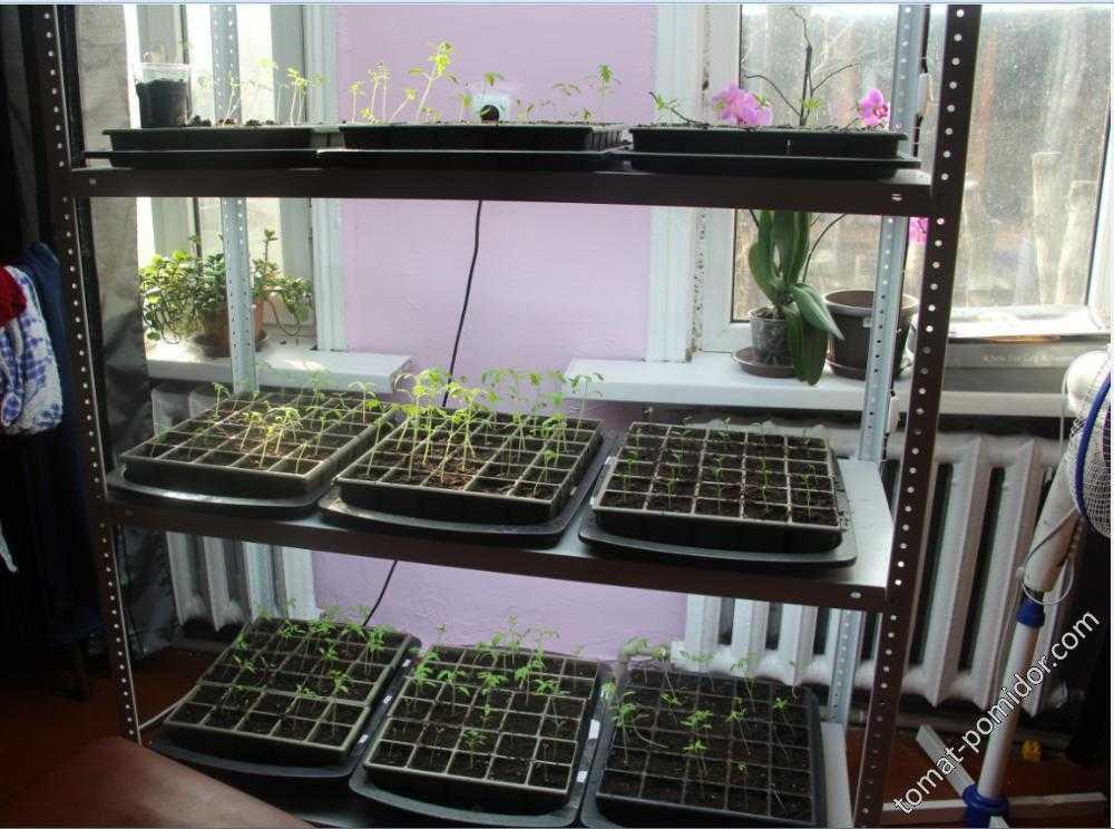 Стеллаж для выращивания рассады своими руками